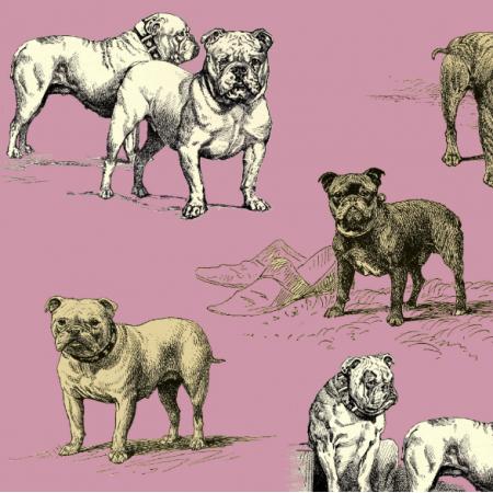 16122 | PSY BULDOGI - BULLDOG DOGS