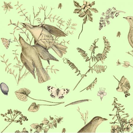 16479 | WIOSENNE PTAKI - SPRING BIRDS