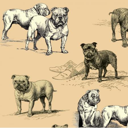 16483 | PSY BULDOGI - BULLDOG DOGS