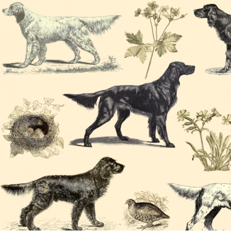 Fabric 16508 | PSY SETERY NA ECRU - SETTER DOGS ON ECRU