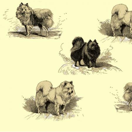 Fabric 16569 | PSY SZPICE MINIATUROWE - TOY SPITZ DOGS