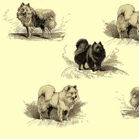 16569 | PSY SZPICE MINIATUROWE - TOY SPITZ DOGS