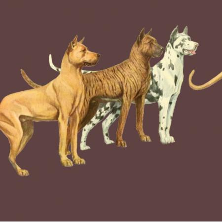Fabric 16687 | PSY DOGI - GREAT DANE DOGS