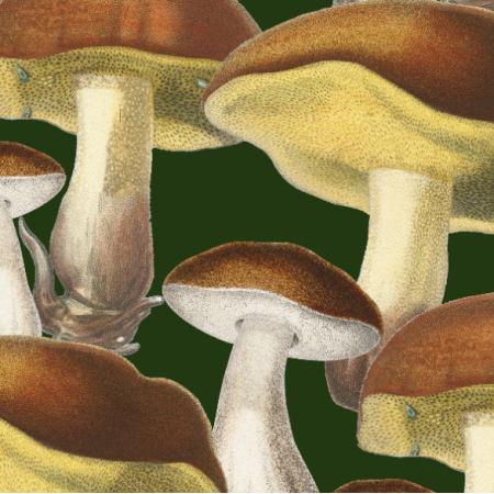 Tkanina  | Mushrooms_001_002