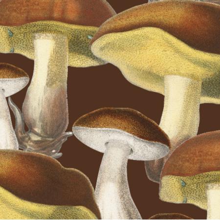 | Mushrooms_001_001