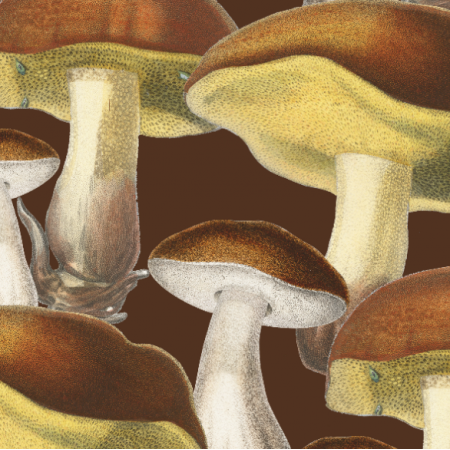 | Mushrooms_001_001