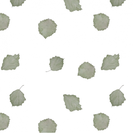 Tkanina 16995 | listki brzozy