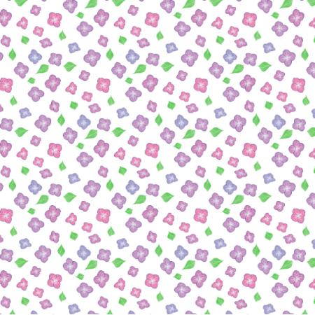 17130 | Hortensja3 na białym tle