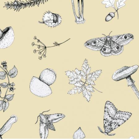 18655 | w lesie wanilia