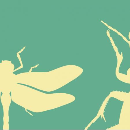 Fabric 18757 | bugs on minty xl
