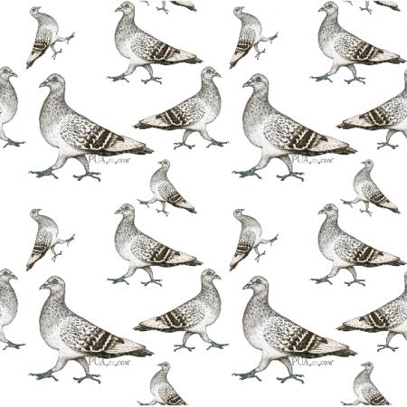 Fabric 18977 | Gołębie na białym tle0