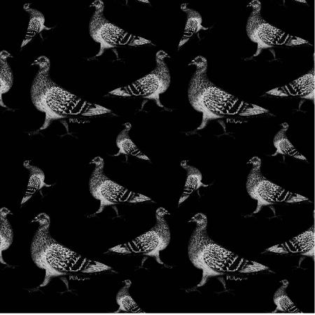 Tkanina 19067 | Gołębie czarno szare