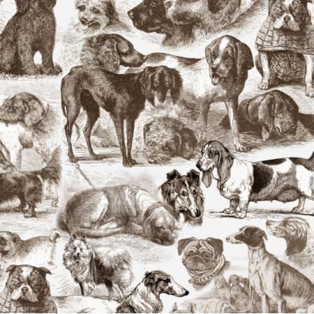 Fabric 19092 | KENNEL / SEPIA NA BIAŁYM
