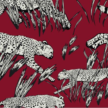 19721 | Hunting cheetahs