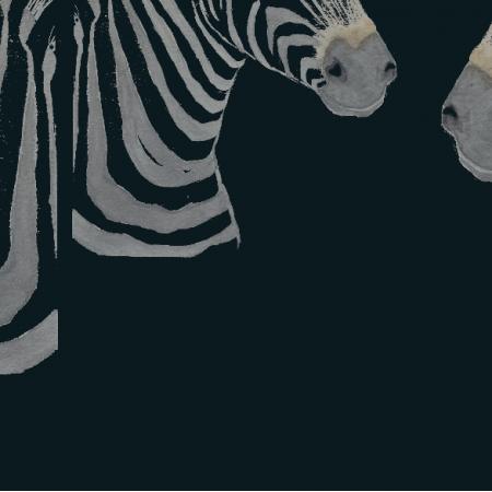 Tkanina 19777   malowane zebry na czarnym tle, tapeta