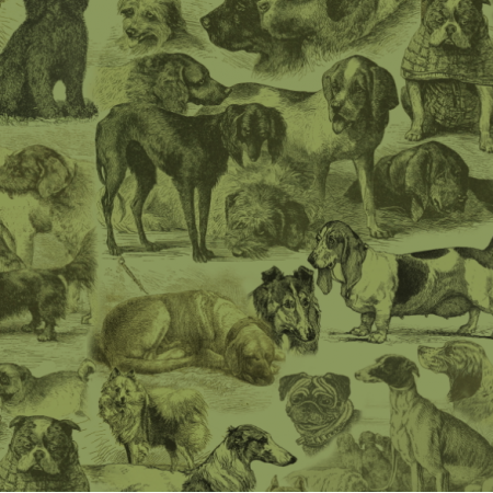 Fabric 20003 | PSIARNIA NA ZIELONO - SAGE GREEN KENNEL
