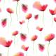 Fabric 20019 | Malowane maki  - akwarele na białym tle